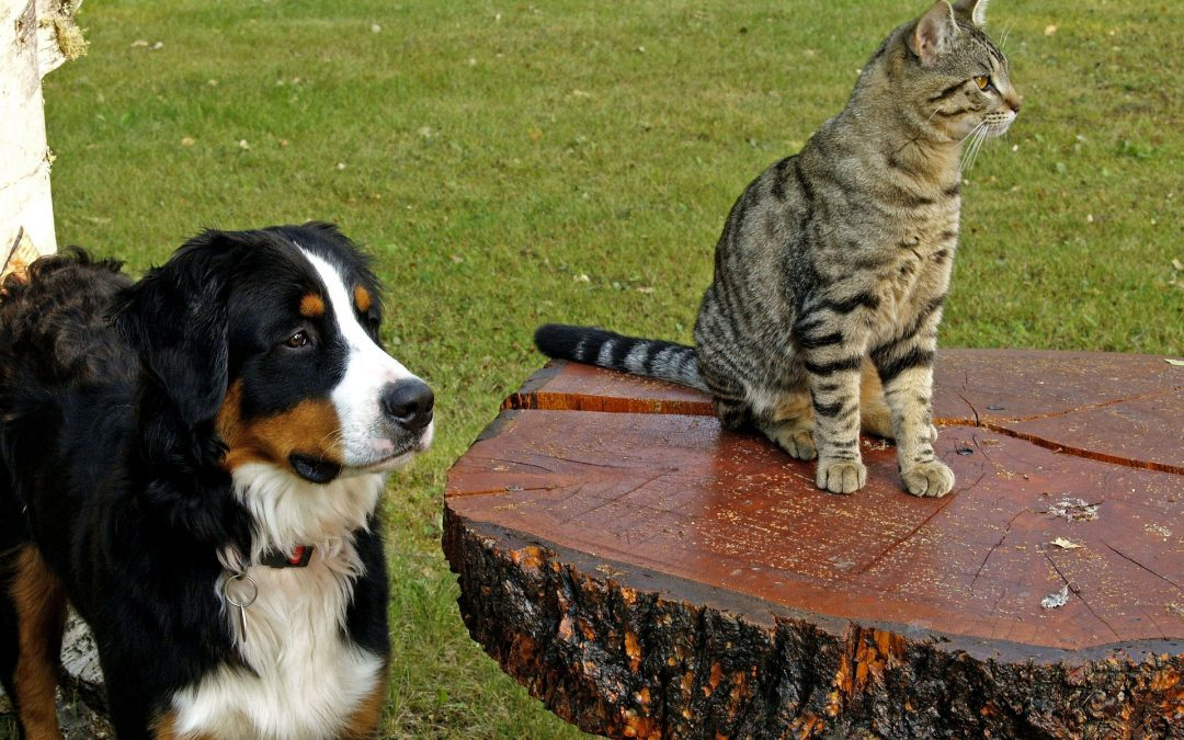 The big question when meeting new people: Dog or cat lover?