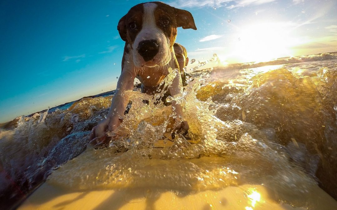 It's hot! Here's how to keep your pet safe
