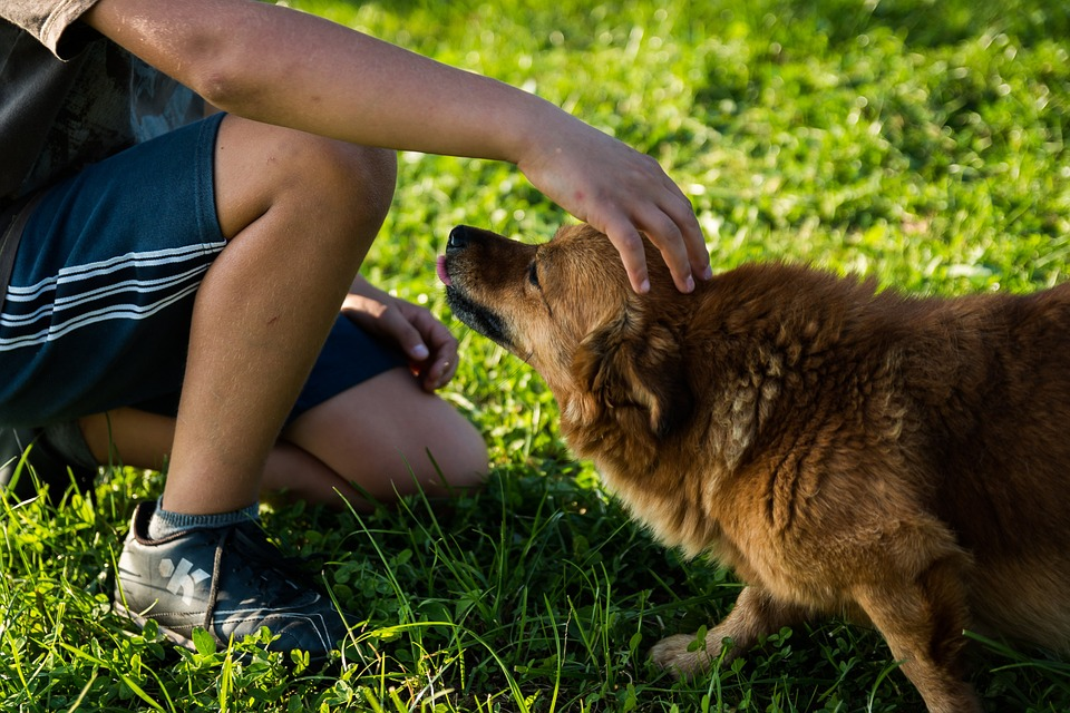 Good Boy! Talking to Your Dog in a Baby Voice Improves Communication Says New Study