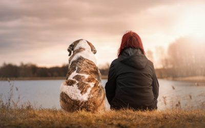 Don't use dog DNA tests to make life-or-death decisions for your pet, experts warn