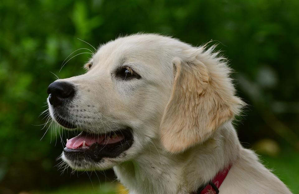 Dog bitten by rattlesnake called 'hero' for saving owner