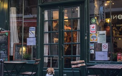 Dogs Dining On Patios Are Illegal Interlopers No More