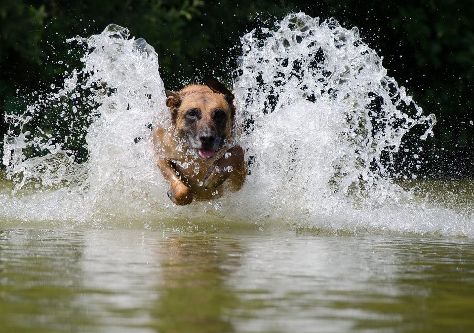 Dogs to Make Splash in Diving Competition