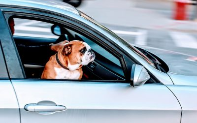 Traveling With Pets? What to Know