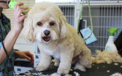 How to Keep You Dog Safe During a Grooming Session
