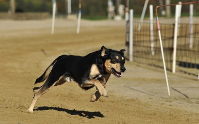 It's a good bet dog racing may end