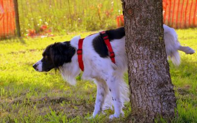 Why Do Dogs Scratch the Ground After They Pee?