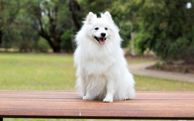 The Most (and Least) Expensive Dog Breeds in the World
