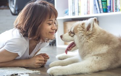 Study: Your dog not only loves you, it will try to save your life