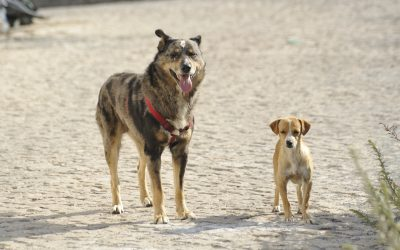 Is your dog lying to other dogs about its size?