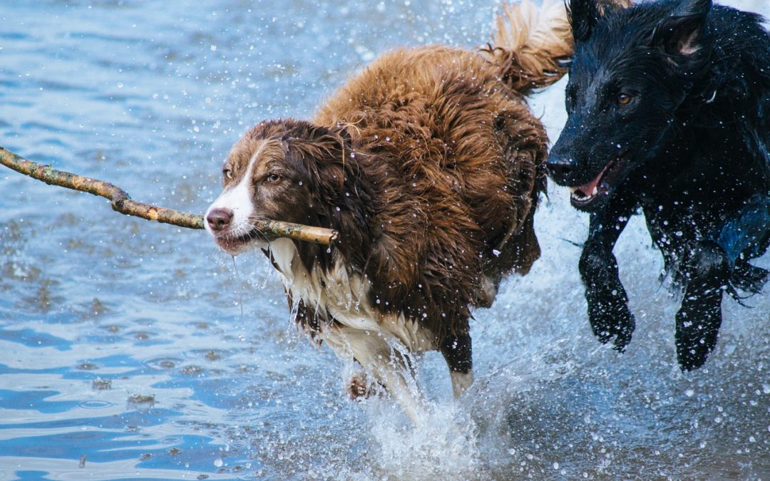 15 Dog Breeds That Are Best For Active People