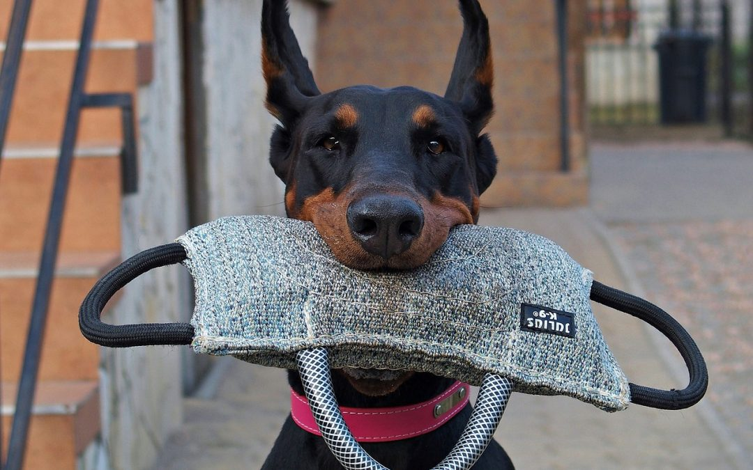 13 Simple Ways to Tell if Your Dog Is Smart