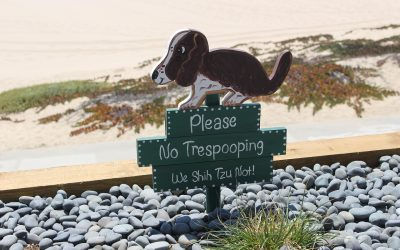 What should you do with your dog's poop?