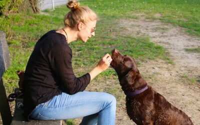 Experts say rewards are the way to train your dog