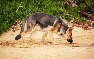How A Dog Could Stop The Global Spread Of Disease