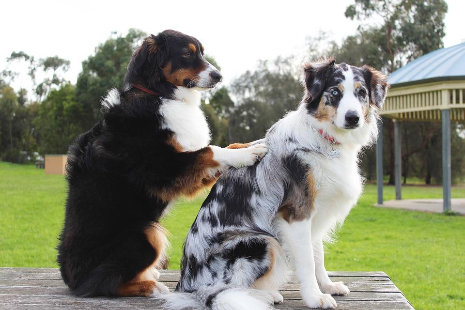13 Reasons Behind Your Dog's Weird Behavior