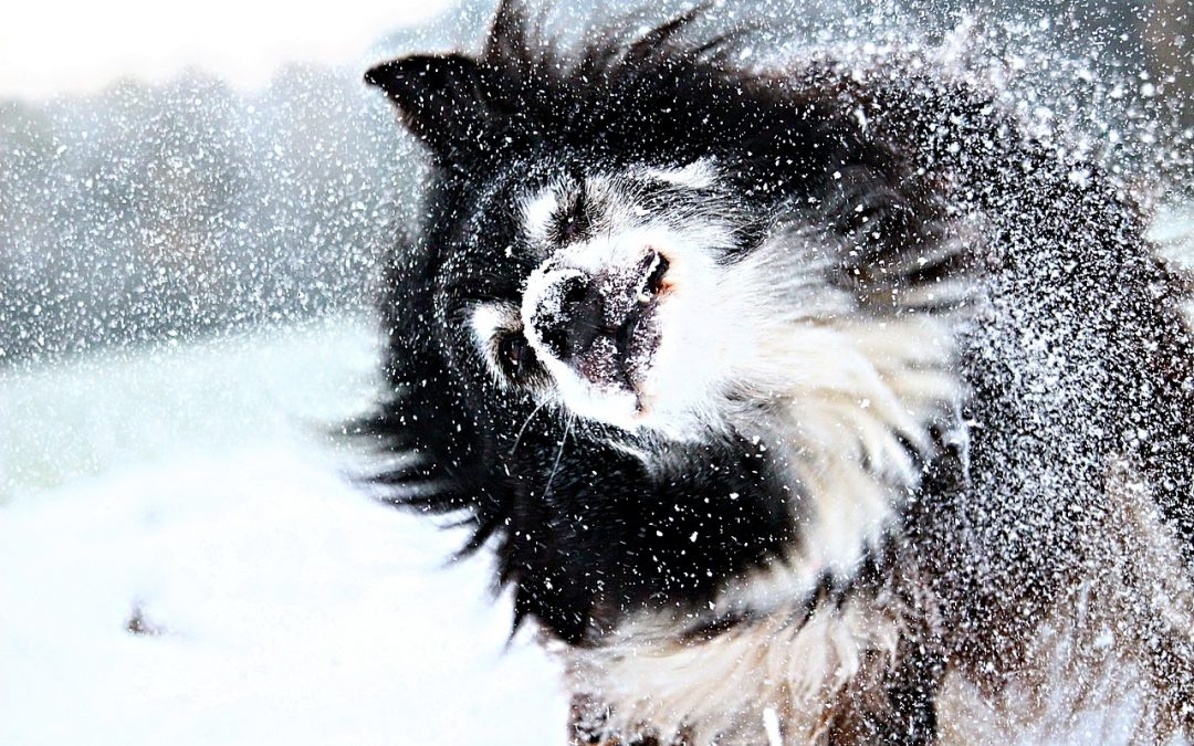 Winter Health and Wellness Tips for Your Dog