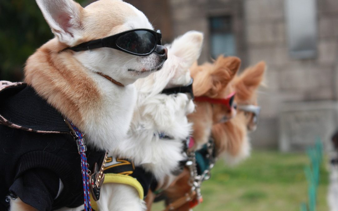 Dog influencers are so popular, they need their own talent agency