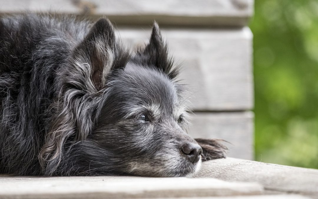 Dog Breeds Really do have Distinct Personalities—and They're Rooted in DNA