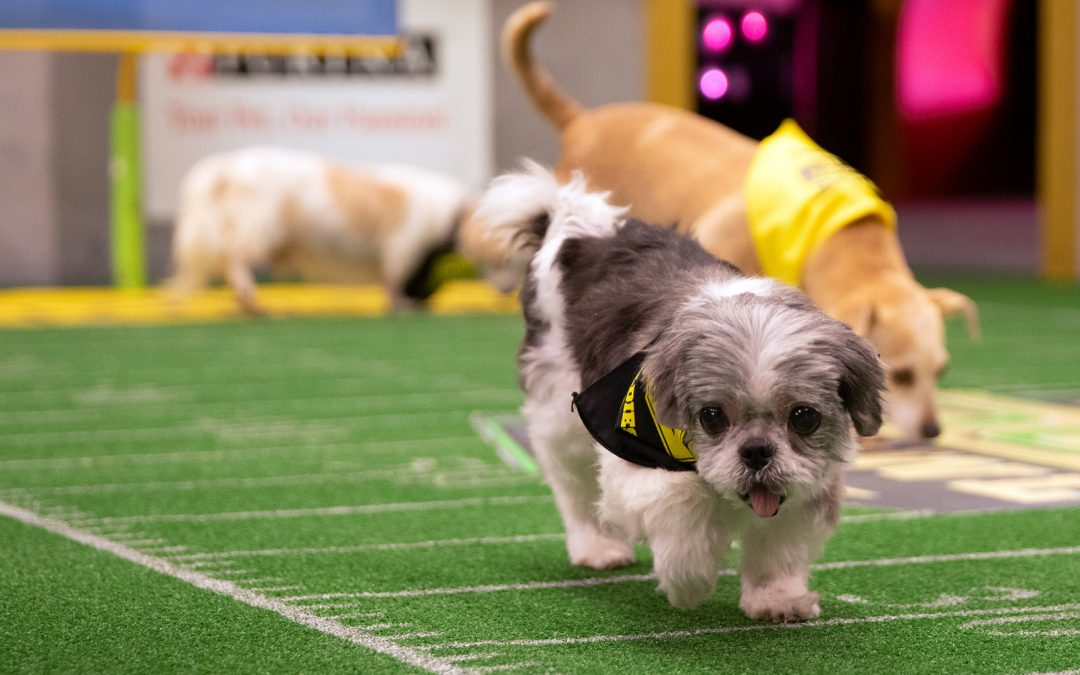 2019 Dog Bowl, Meet the Four Legged Stars