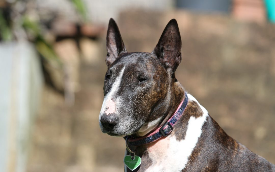 Dog Breeds for the Working Man or Woman
